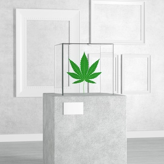 Medical marijuana or cannabis hemp leaf over pedestal, stage, podium or column with glass showcase cube in art gallery or museum on a white background. 3d rendering