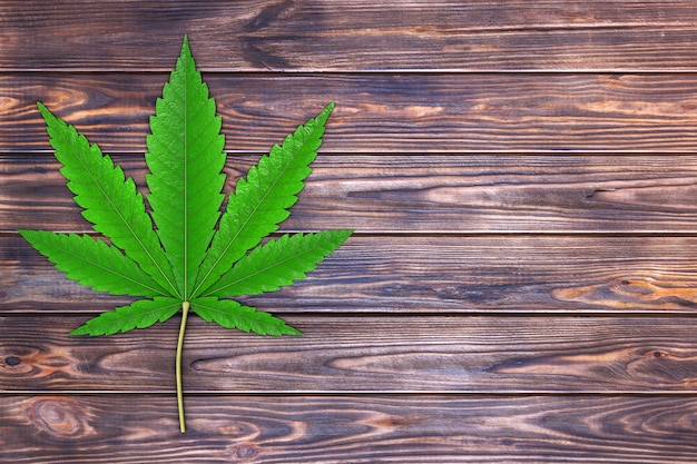 Medical marijuana or cannabis hemp leaf on a plank wooden table. 3d rendering