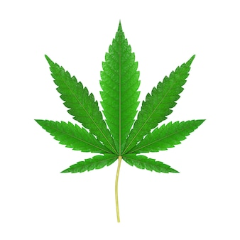 Medical marijuana or cannabis hemp leaf on a white background. 3d rendering