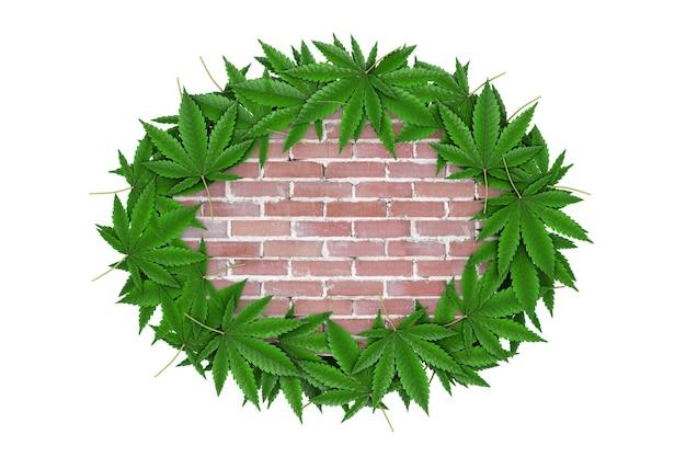 白い背景の上のあなたのデザインのための空きスペースとレンガの壁の周りの医療用マリファナまたは大麻麻の葉。 3dレンダリング