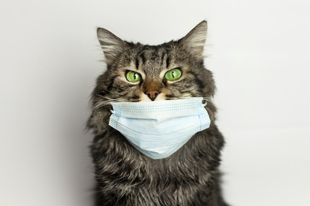 Portrait of a cat in a medical mask on quarantine at home ...