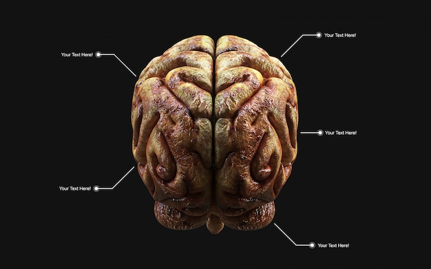 Medically 3d illustration of the human brain in rear view