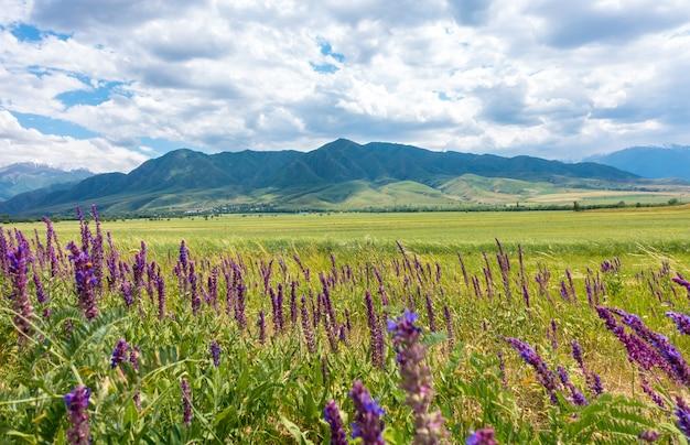 背景に山と青い空と薬用花畑