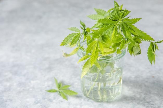 薬用麻は、cbd麻と一緒にガラスのスポイトボトルに残します。医療大麻の概念