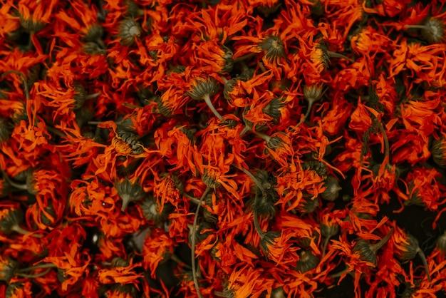 약초 건조 식물 메리 골드, 오렌지 금송화. 고품질 사진