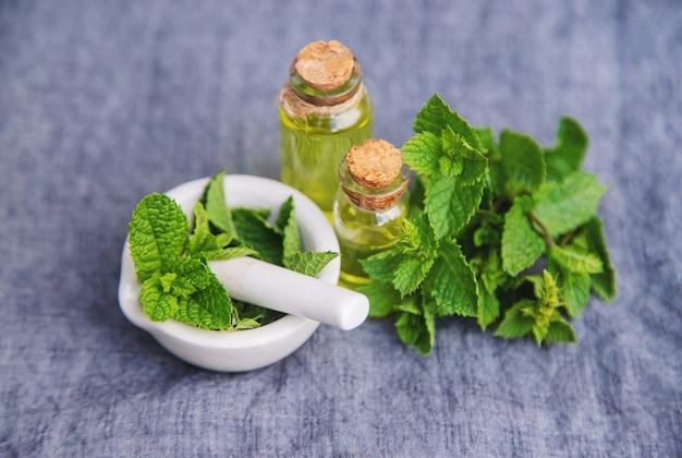 Лекарственные травы. мята. выборочный фокус.