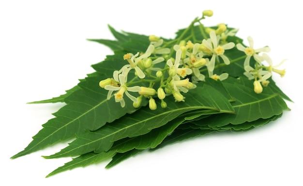 흰색 배경 위에 약용 님 잎과 꽃