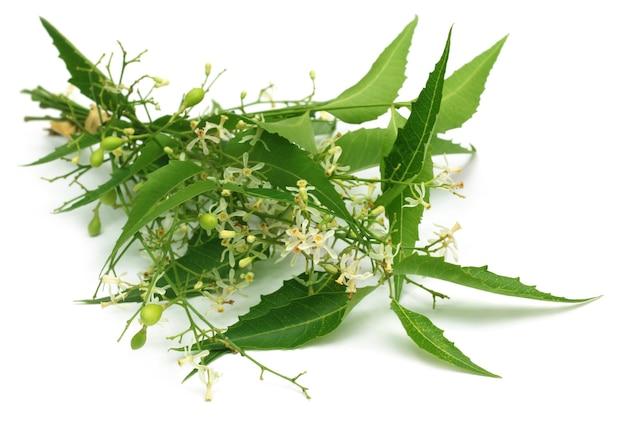 흰색 배경 위에 꽃과 약용 님 잎