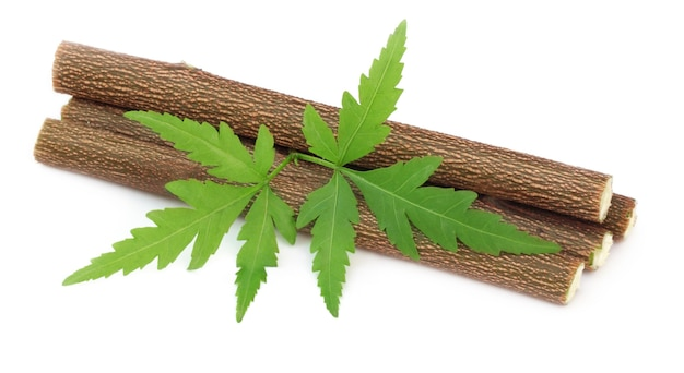 Medicinal neem twigs with leaves over white background