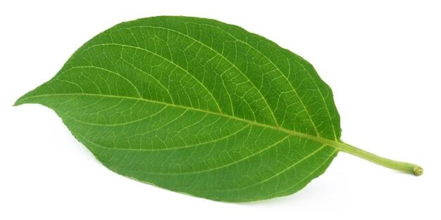 Лекарственная paederia foetida, названная gondho badali на индийском субконтиненте.