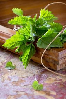 Лекарственное растение свежие листья крапивы