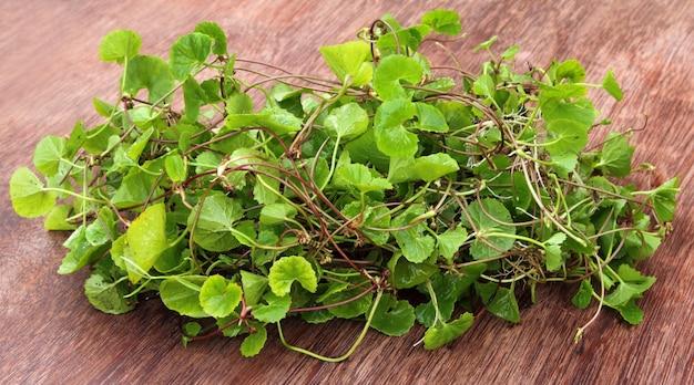 Лекарственные листья спасибо индийского субконтинента крупным планом