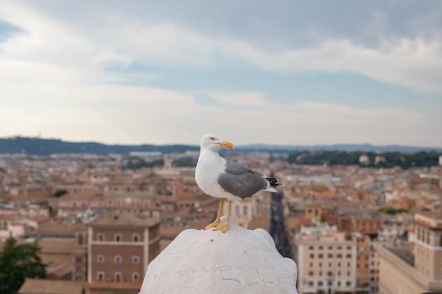 이탈리아 로마의 비토리아노 지붕에 지중해 갈매기 좌석이 있습니다. 화창한 날과 푸른 하늘이 있는 여름 배경