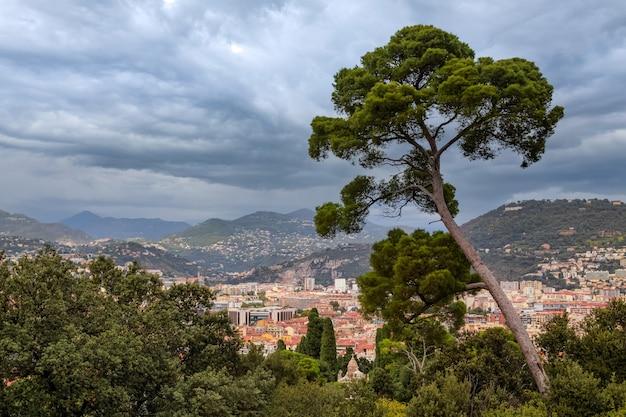 Средиземноморская сосна на холме над городом ницца французской ривьеры, франция