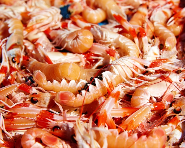 Mediterranean sea crayfish in javea fish market