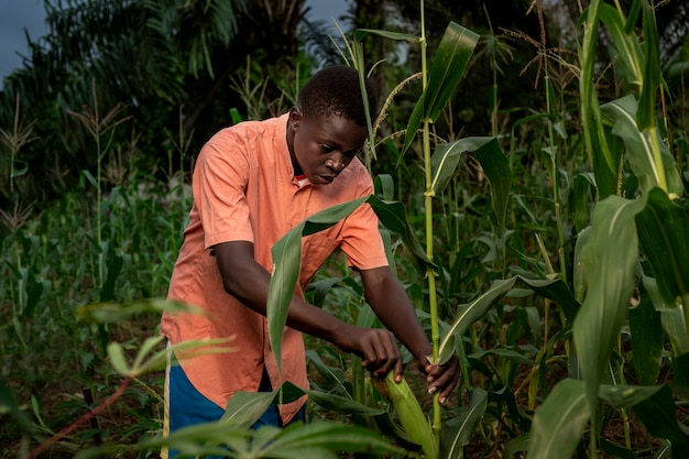 Средний выстрел мальчик, работающий на кукурузном поле