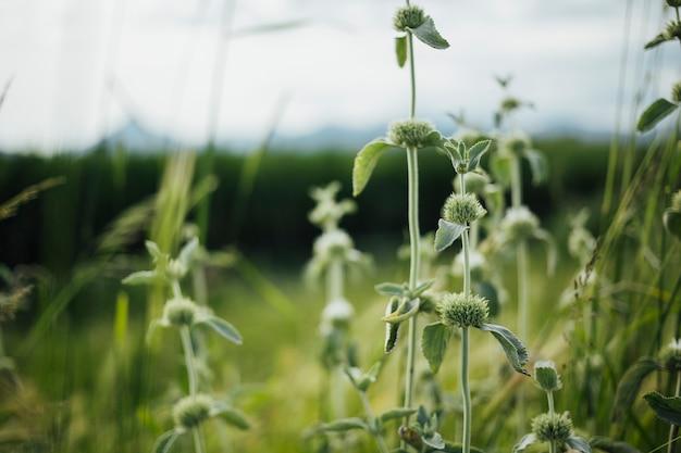 ミディアムショットチキンクローズアップトップビュー草原植物ペン 無料写真