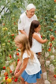 ミディアムショットのおばあちゃんと子供たちがトマトを選ぶ