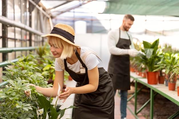 Persone di livello medio che si prendono cura delle piante