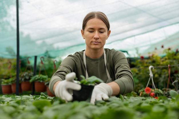 식물을 돌보는 미디엄 샷 여성