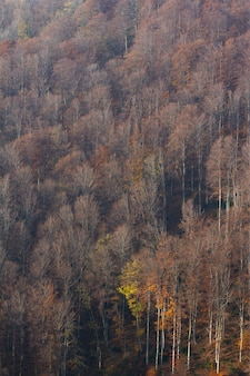 ザグレブ、クロアチアの山medvednicaの背の高い乾燥した木の垂直方向のショット