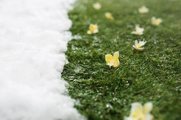 冬と春のコンセプトの背景の間に、白い雪と緑の草と花の出会いがクローズアップされます。
