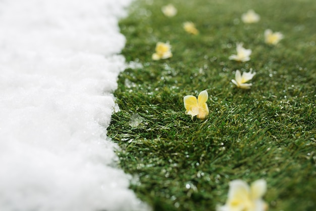 Meeting white snow and green grass with flowers close up - between winter and spring concept background.