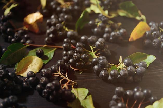 暗いテーブルに枝ブラックチョークベリーの果実(アロニアmelanocarpa)