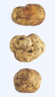 Melanogaster broomeanus - несъедобный гриб, похожий на трюфель.