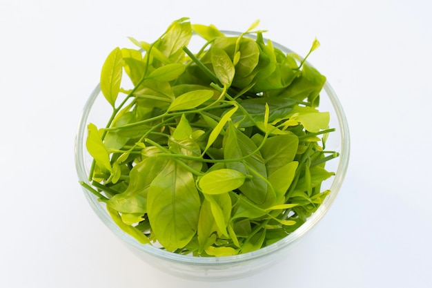 Melientha suavis pierre leaves in glass bowl on white background.