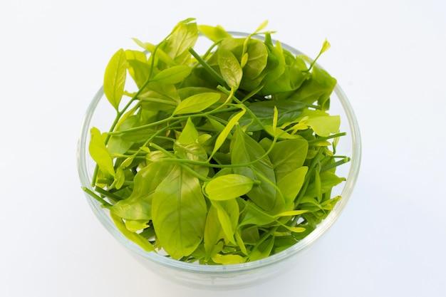 Melientha suavis pierre는 흰색 배경에 유리 그릇에 나뭇잎.