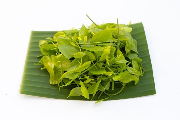 Melientha suavis pierre는 바나나 잎에 나뭇잎