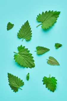 Melissa or leaf lemon balm isolated. lemon balm leaves of different sizes isolated. composition of melissa or lemon balm.