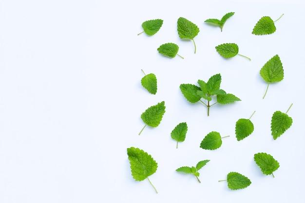 メリッサレモンバーム新鮮な葉