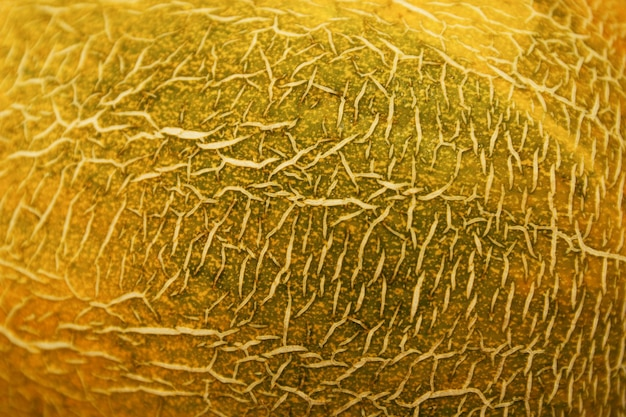 Melon peel texture. close-up. background. space for text.