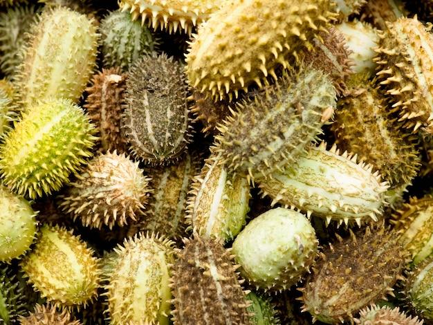 Melothriaの明るい緑色の果物。カボチャの家族からのエキゾチックなキュウリ