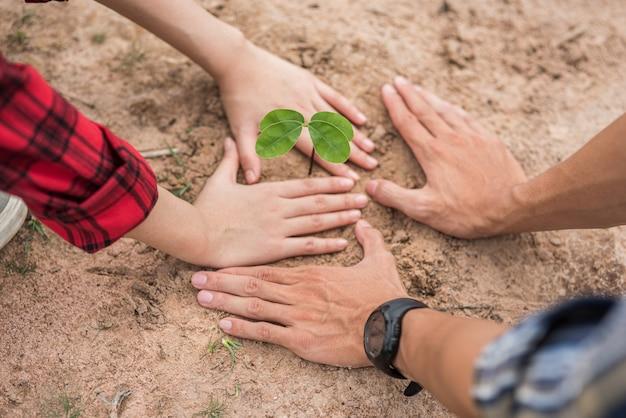 Мужчины и женщины помогают выращивать деревья.