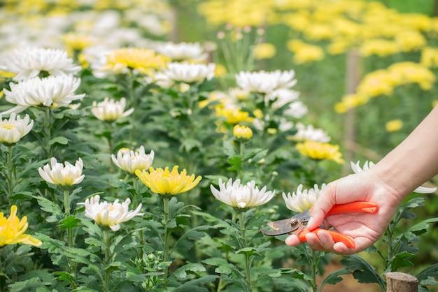 庭の花の世話をする男性。