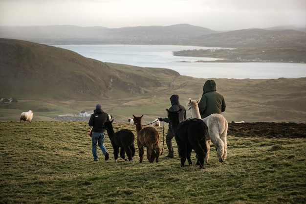 湖と山のあるフィールドでラマを歩く男性