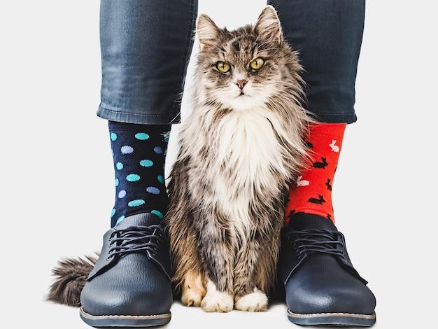 남성 다리, 트렌디 한 신발 및 밝은 양말.