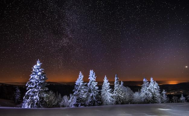 매혹적인 밤 풍경 눈 덮인 전나무는 비 산맥과 별이 빛나는 맑은 하늘을 배경으로 눈 더미 사이에서 자랍니다.
