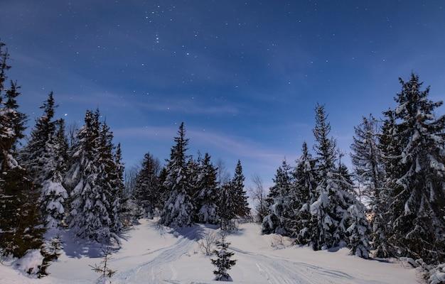 雪の吹きだまりの中には、魅惑的な夜景の雪に覆われたモミの木が生えています。北の自然の美しさの概念。オーロラのコンセプト