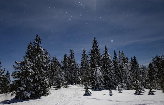 魅惑的な夜景冬の雪に覆われたモミの木