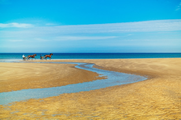 Immagine affascinante di cavalli con carri sulla sabbia dorata contro un bellissimo oceano