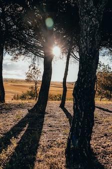 햇살 아래 키 큰 나무들의 매혹적인 풍경