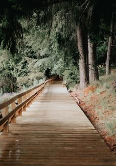 緑の木々を抜ける木造歩道の魅惑的な風景