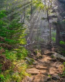 햇빛 아래 아름다운 숲 지역의 매혹적인 샷