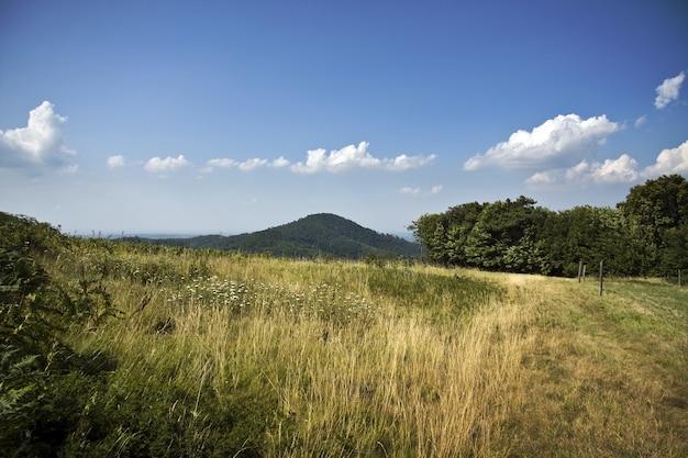 曇り空の下の緑の野原の美しい風景の魅惑的なショット