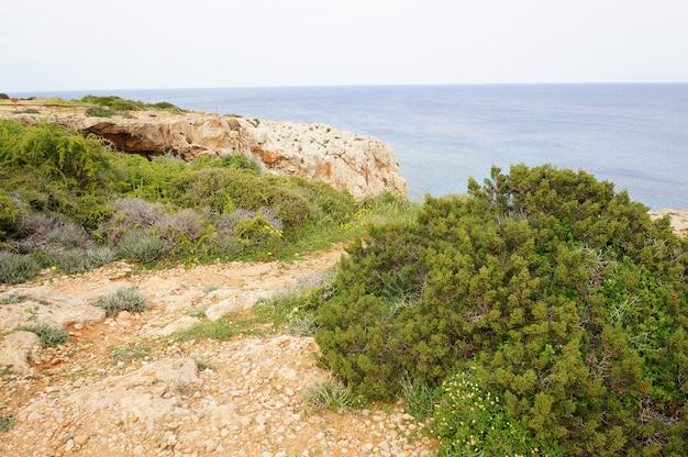 Vista incantevole sull'oceano calmo con scogliere ed erba sulla riva