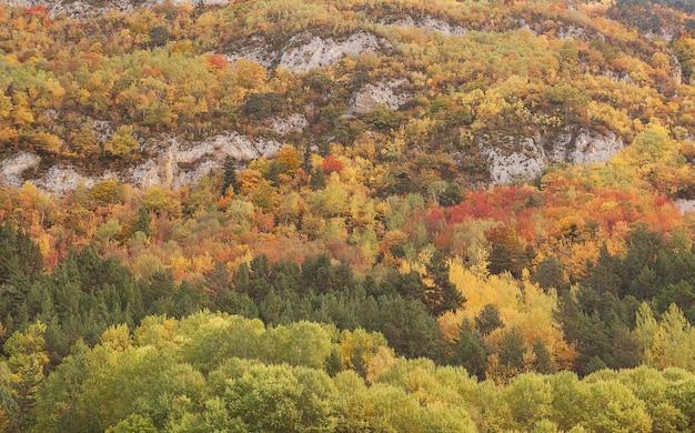Vista affascinante di alberi colorati su una montagna rocciosa in autunno in spagna